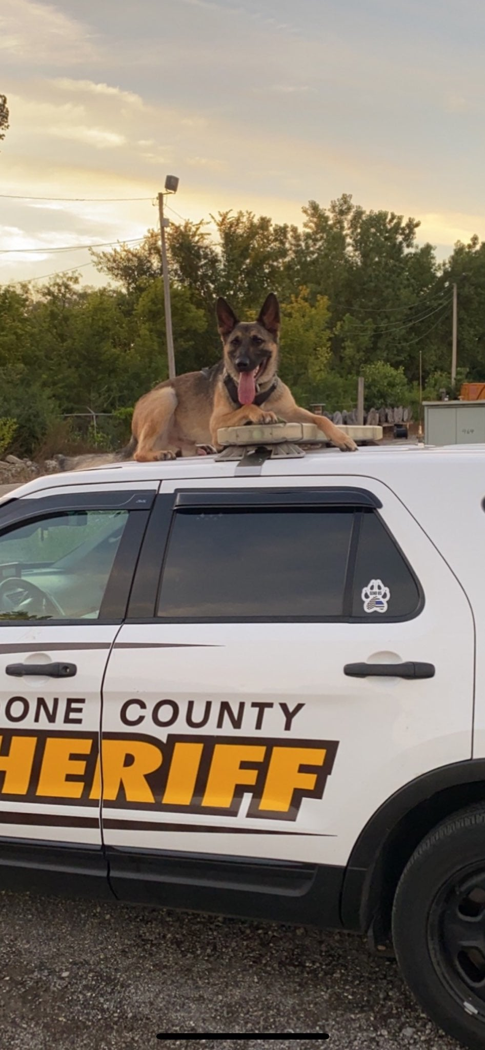 K9 Loki | Boone County Sheriff's Office, Illinois