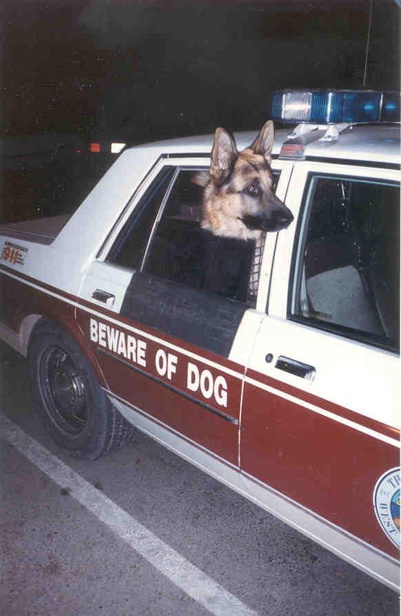 K9 Captain | West Sacramento Police Department, California