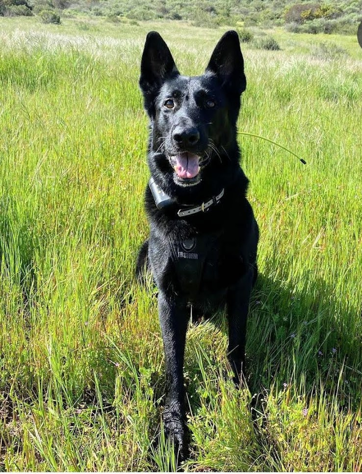 K9 Django | United States Department of Homeland Security - Customs and Border Protection - United States Border Patrol, U.S. Government