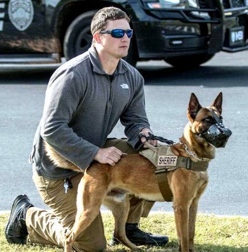K9 Figo | Cullman County Sheriff's Office, Alabama
