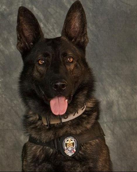 K9 Kozmo | Mesquite Police Department, Texas