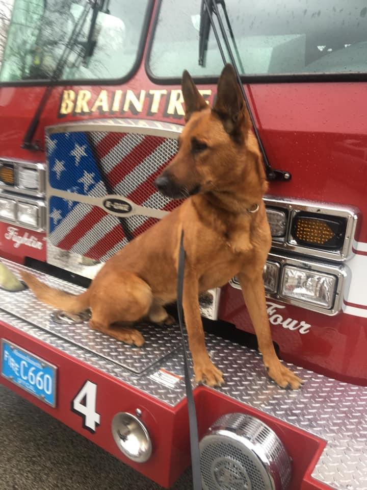 K9 Kitt   Braintree Police Department, Massachusetts