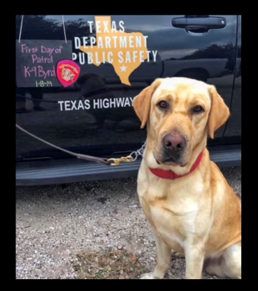K9 Byrd   Texas Department of Public Safety - Texas Highway Patrol, Texas